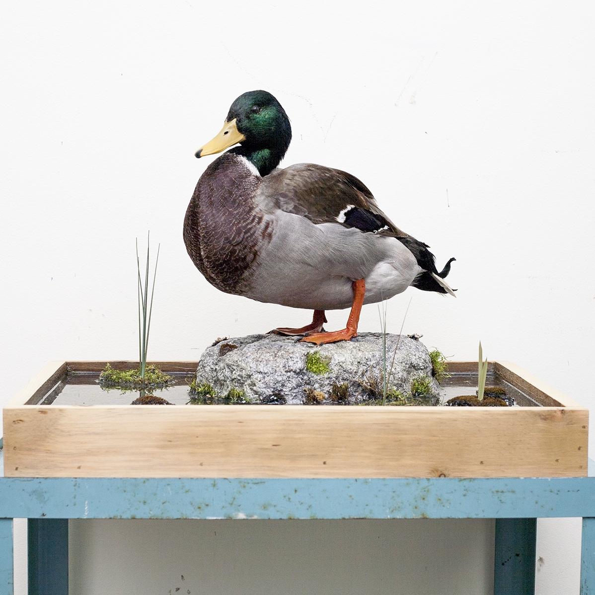 duck-1.jpg