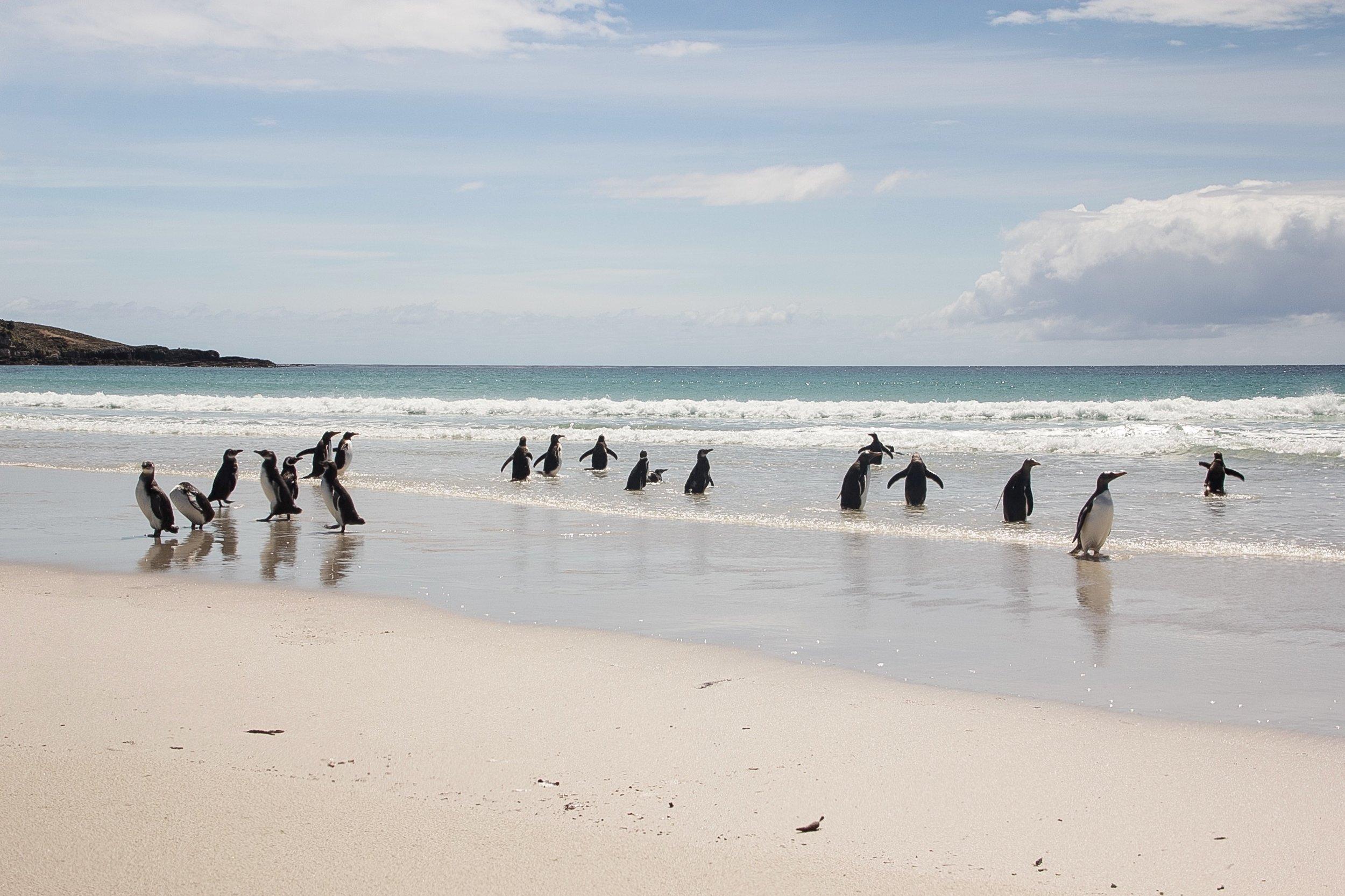 Stanley_North Pond Penguins_-22.jpg