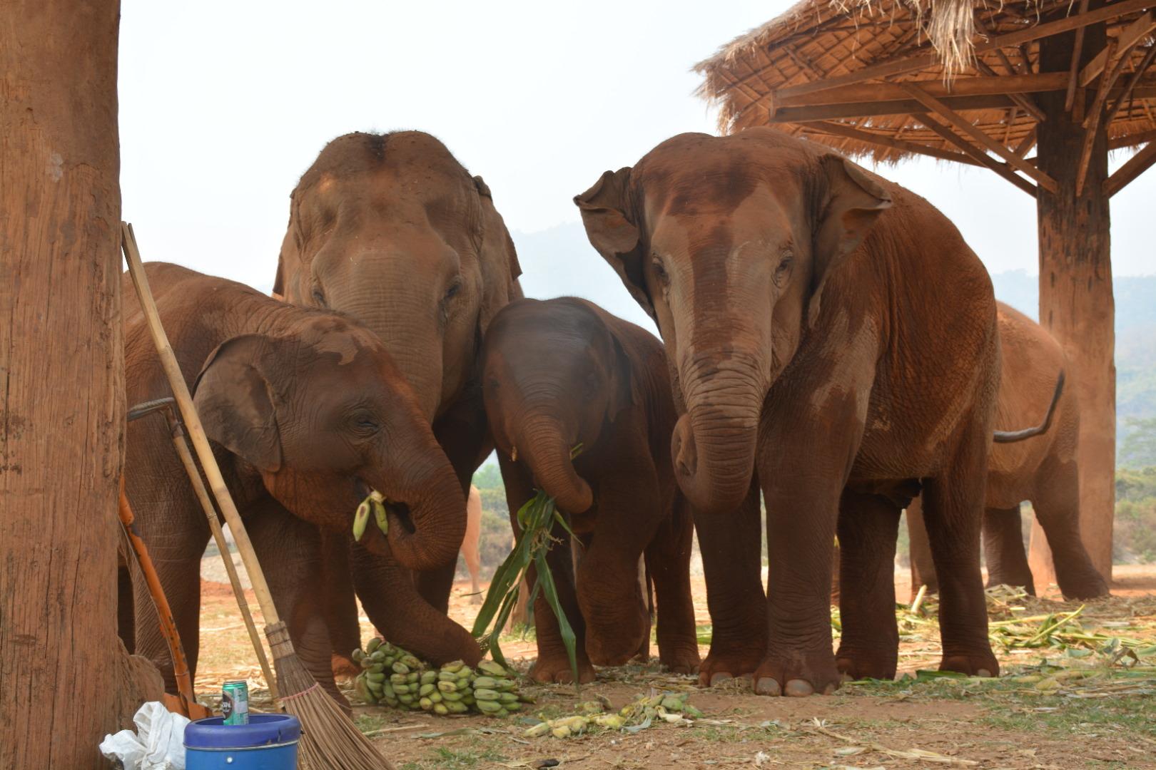 Maeteng Elephant Park