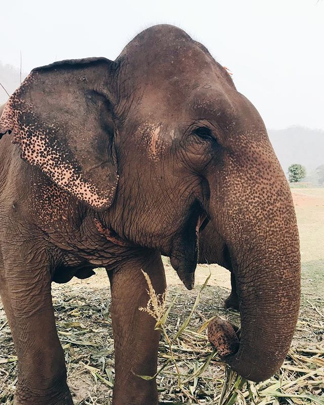 Traveling to Thailand made us as happy as this elephant 🐘 Our app for Thailand Spring Break 2019 is out now! Apply at bit.ly/annthailand  This program is open to all undergraduate and graduate Annenberg majors and minors who are interesting corporate social responsibility and communication advocacy. Tag a friend who  should apply! 👫✈️