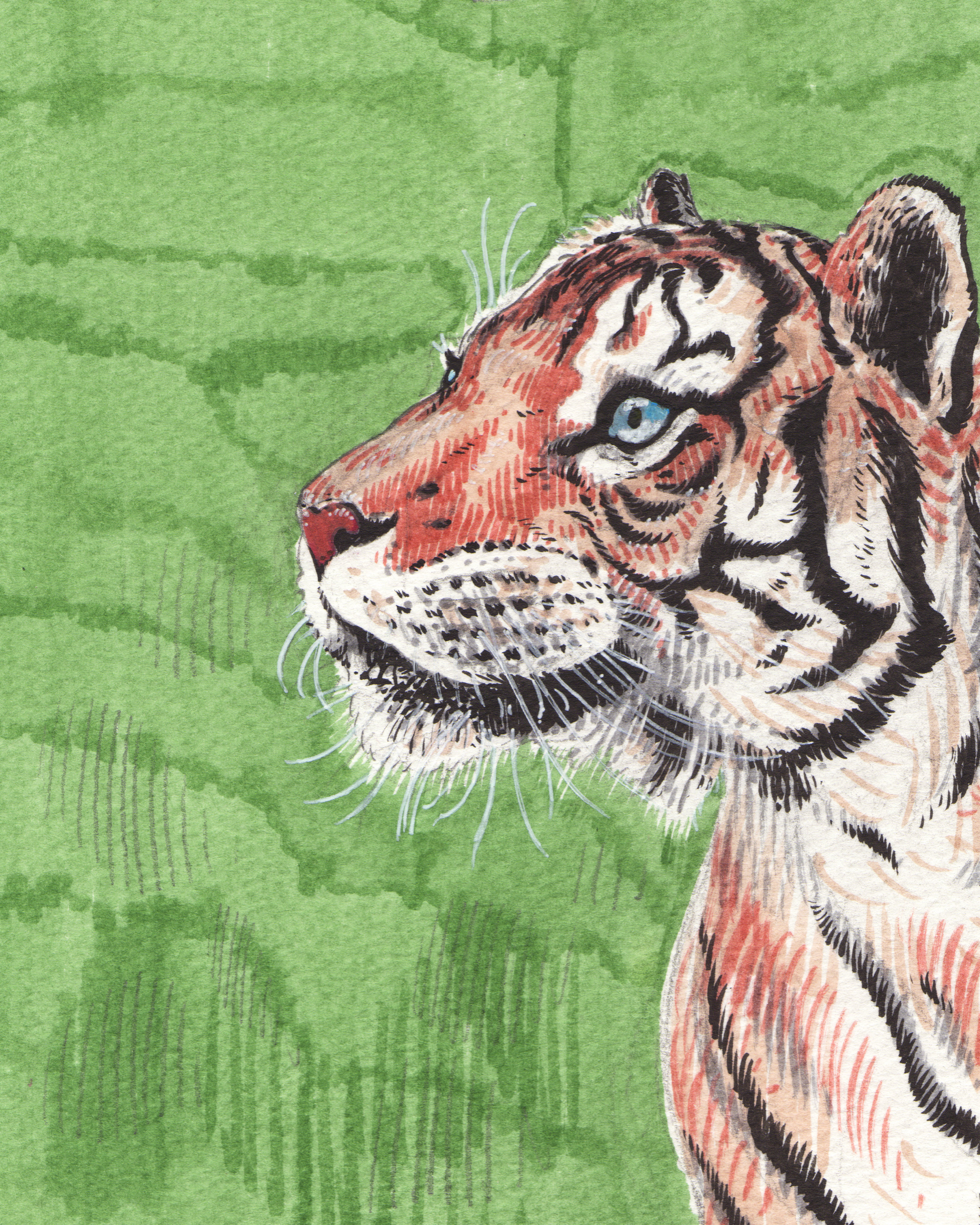_tiger.jpg