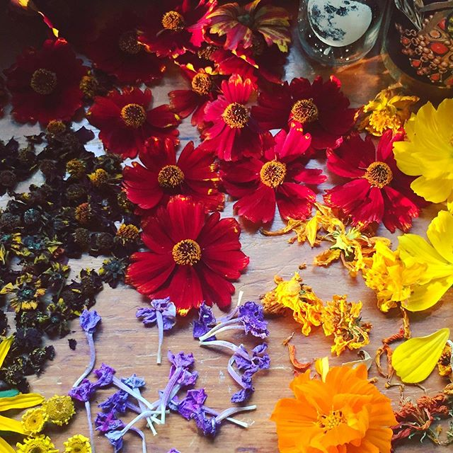 Couple spots left for this Fridays Garden Dye Workshop!! You can bundle dye with fresh flowers picked straight from the garden, immersion dye with marigold, black eyed Susan, and coreopsis, and learn all about dyeing from plants you can grow in your own garden... come join the fun! Find out more on the website🌿