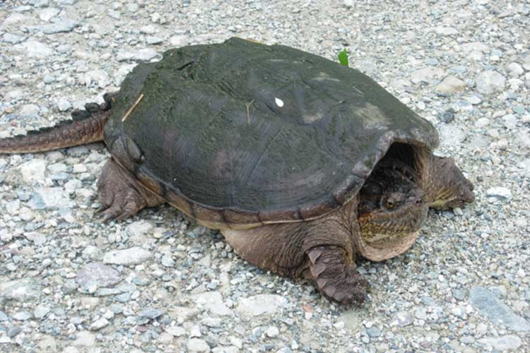 While this shy guy isn't a box turtle, he is one of the species in Rehoboth that could benefit from your land donation.