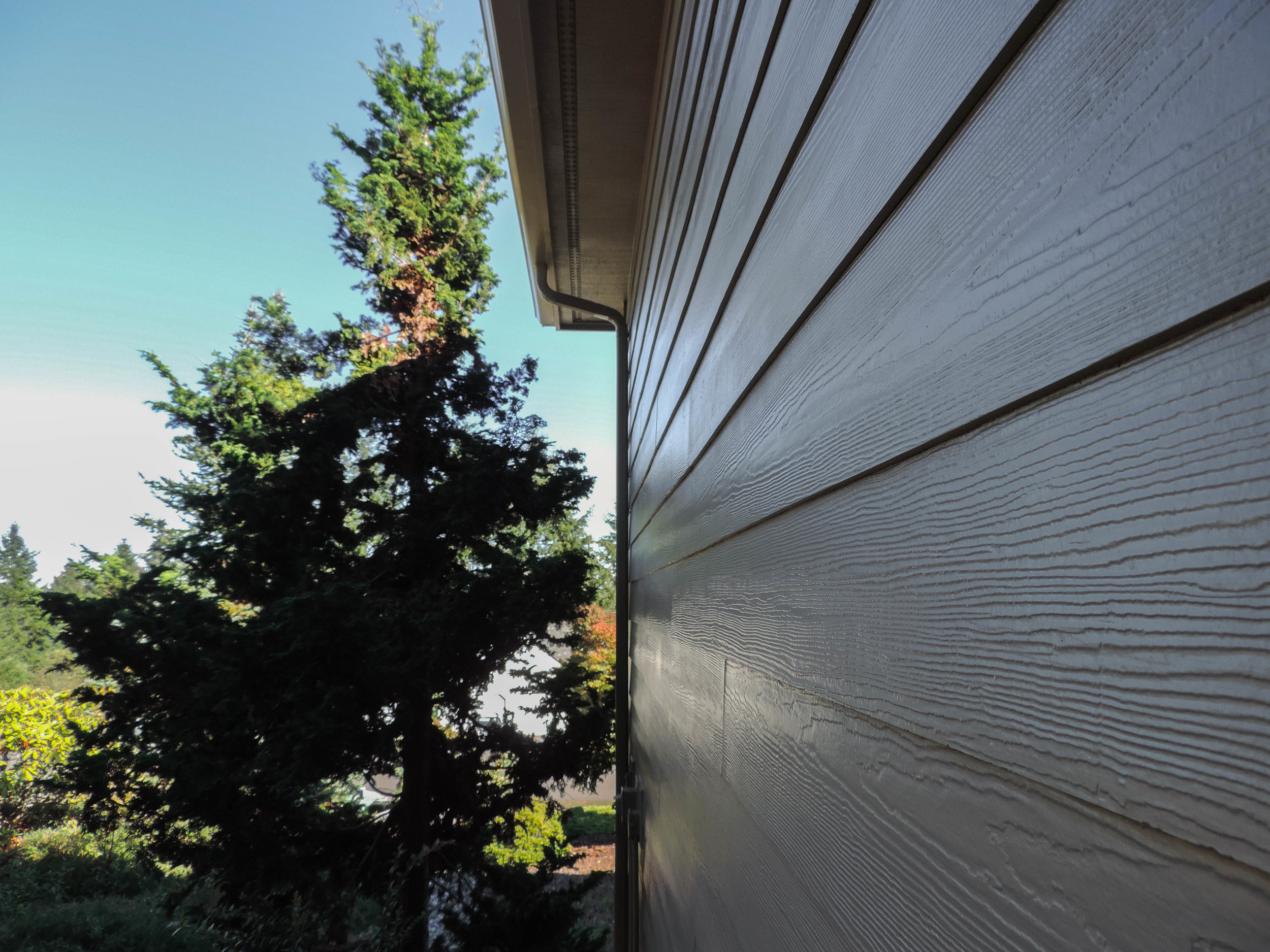Daylight illuminating this fine paint job by our team in Poulsbo
