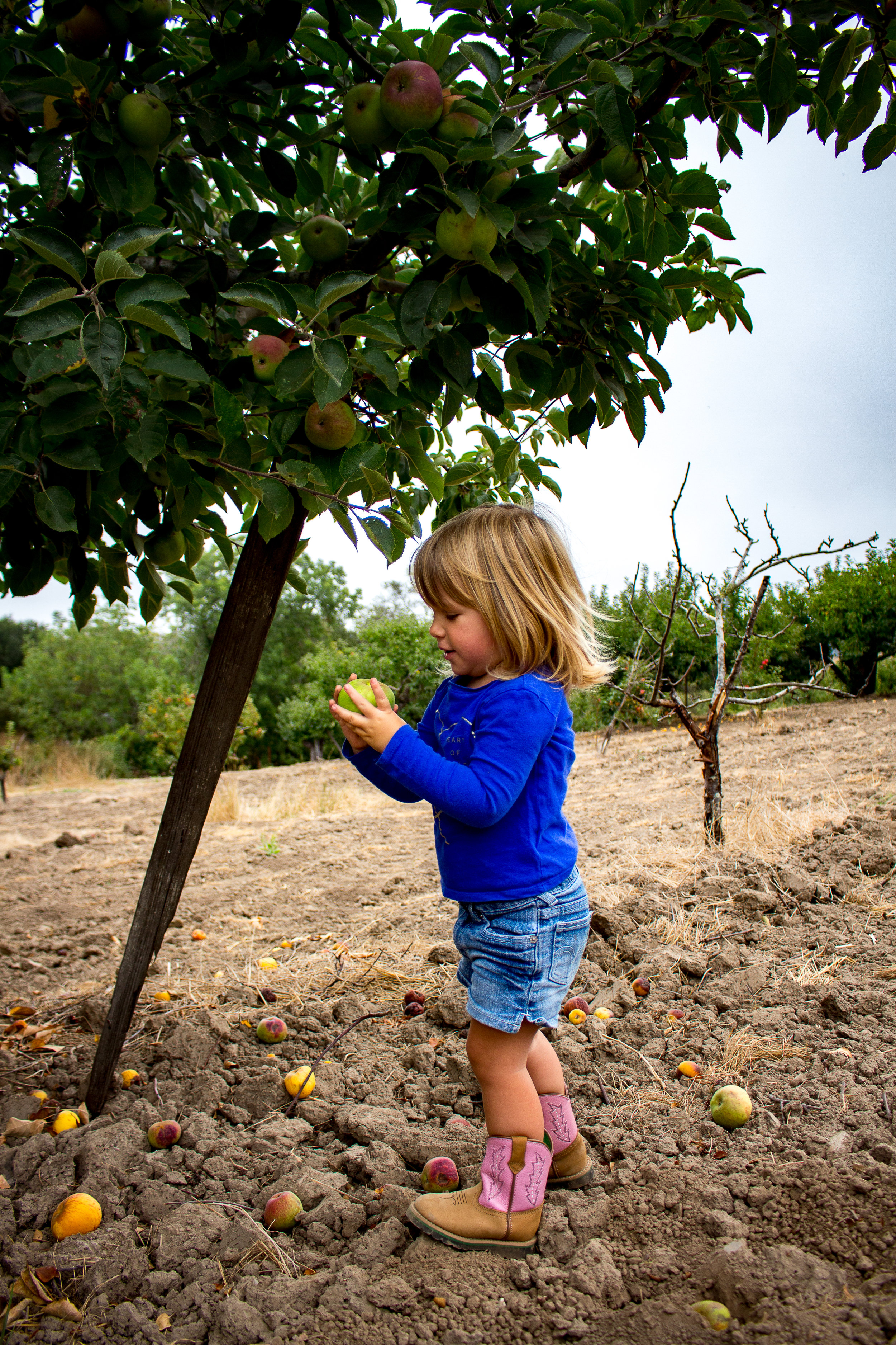 apple picking-3.jpg