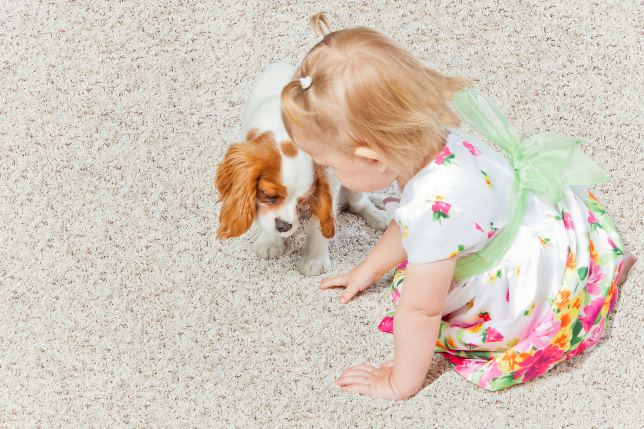 Child and small dog sitting on carpet cleaning by Columbia Carpet Cleaning