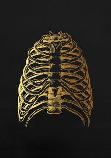 anatomy rib cage black A4.jpeg