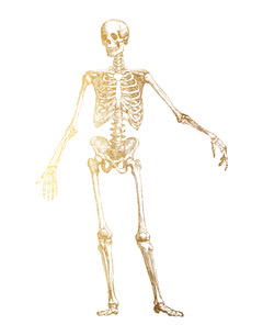 anatomyskeleton11x14.jpeg