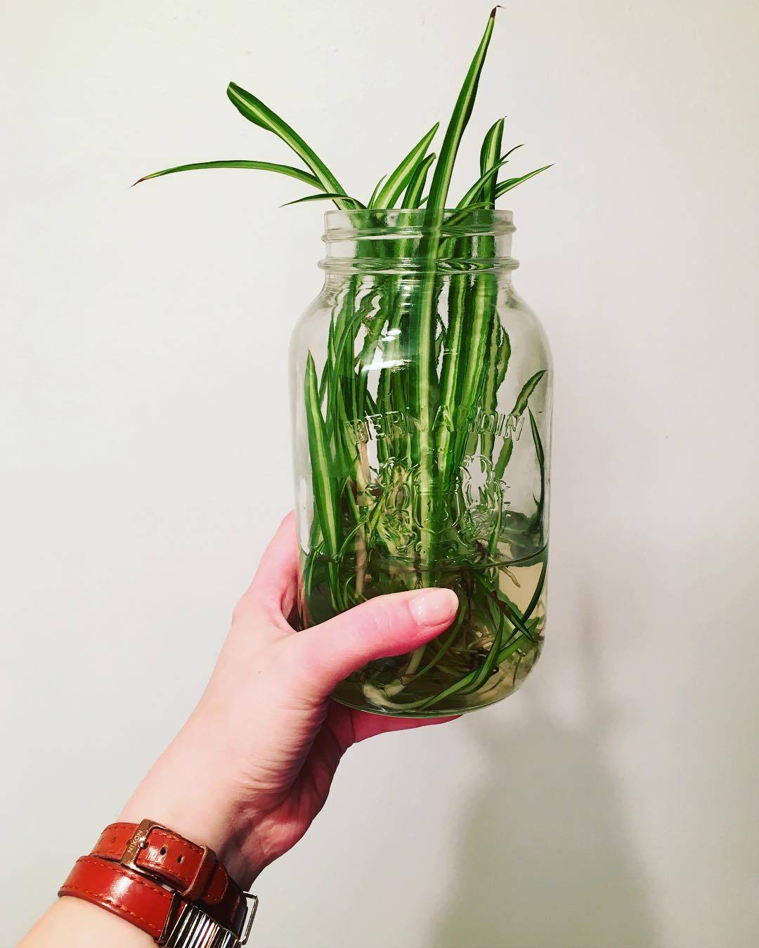A spider plant only needs NOURISHMENT and a safe space with room to grow, just like you. Let us help you make the space for your future growth.