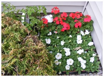 Selecting Annuals, storing.jpg