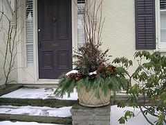 Red dogwood, pine, cedar, magnolia leaves, pepperberries, pinecones, seeded eucalyptus