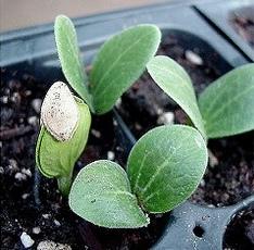 Potting Mix for seedlings.jpg