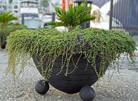 Dramatic-Evergreen-Container-by-Pixies-and-Pixels.jpg
