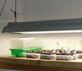 starting-seeds-under-florescent-light-by-nociveglia.jpg