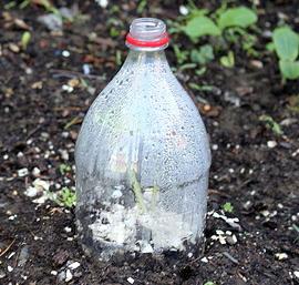 Bottle--cloche--by-Molly.jpg