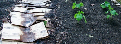 Layered-mulch-garden-by-Fire-on-the-Hill_1.jpg