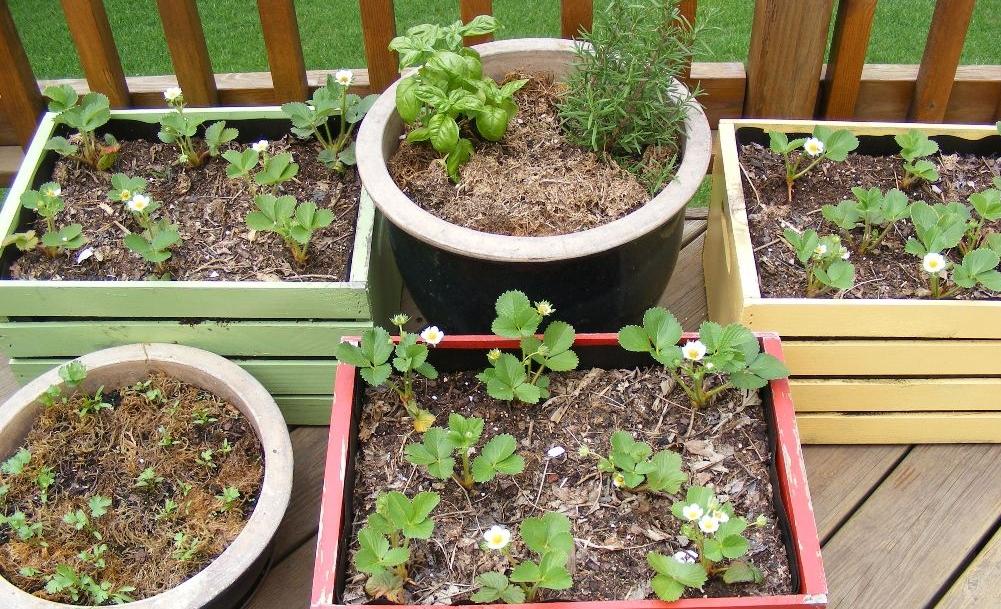 Herb Garden by Midwest Gardening