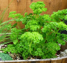 Parsley-by-Kate.jpg