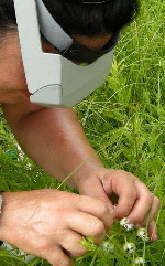 Hand-Pollinate.jpg