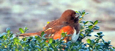 Backyard-Birds-by-bobistraveling.jpg