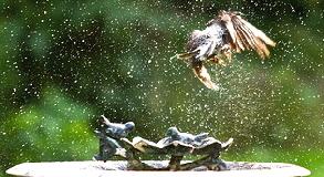 Bird-in-flight-by-Brian-Wolf.jpg