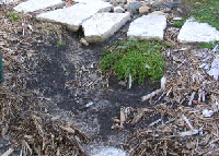 Runoff-Erosion by Midwest Gardening.jpg