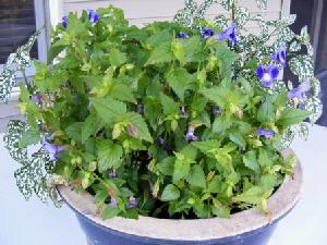 Refresh-plants-few-blooms by Midwest Gardening.jpg