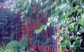 Rain-for-the-plants-by-basswulf.jpg