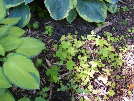 Weeding-out-seedlings--sprouts-and-tiny-weeds by Midwest Gardening.jpg