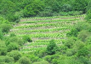 Terraced-hillside-microclimate-by-nikoretro.jpg