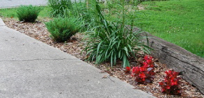 Microclimate-garden-by-NCReedplayer.jpg