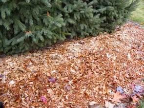 Mulch with shredded leaves by the ordinary gardener.jpg