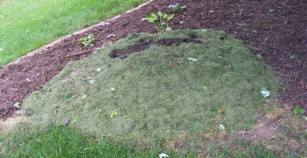 Grass Clipping Mulch by Midwest Gardening.jpg