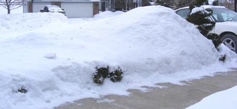 Relentless-Winter-by-Midwest Gardening.jpg