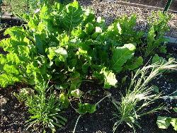 Interplanting-by-Strata-Chalup.jpg