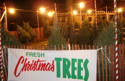 Fresh-Christmas-Trees-by-Regan76.jpg