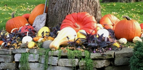 Pumpkins-and-Gourds-by Midwest Gardening.jpg