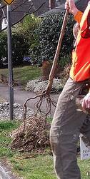Bare-root-tree-by-Greg-Raisman.jpg