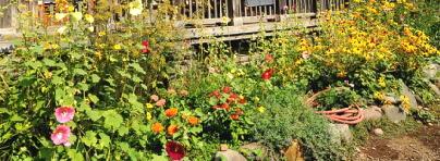 Early-Fall-Garden-by-Wonderlane.jpg