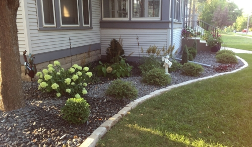 Summer Landscape - The front foundation plants are filling in nicely and new things are blooming