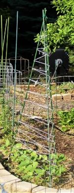 Tee Pee trellis by Midwest Gardening