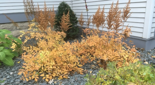 Golden Hues of Autumn by Midwest Gardening