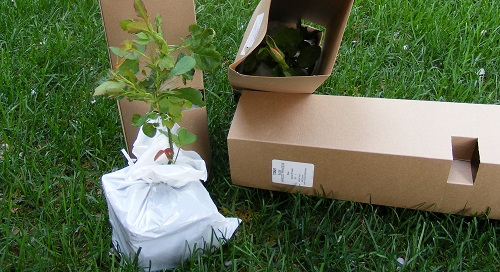 Mail Order Plants by Midwest Gardening.jpg