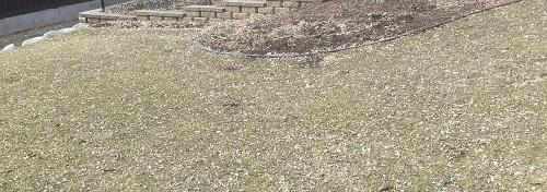 Spring Lawn by Midwest Gardening.JPG