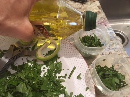 Basil and Olive oil by Midwest Gardening