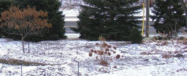 Winter Garden by Midwest Gardening.jpg