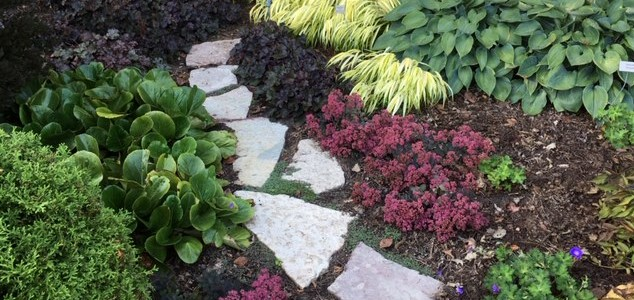 More Plants by Midwest Gardening.jpg