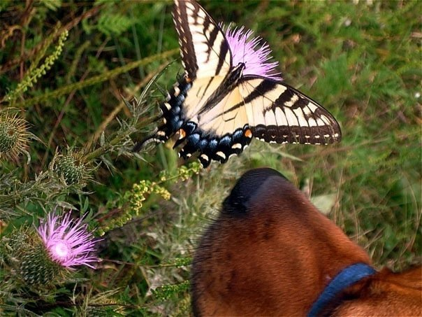 Lucy and the Butterfly.jpg