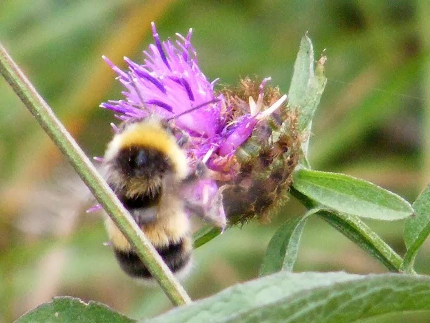 Image courtesy of oirenature.blogspot.co.uk