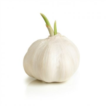 Fresh Garlic is on of our most required products, being available only during collection season.